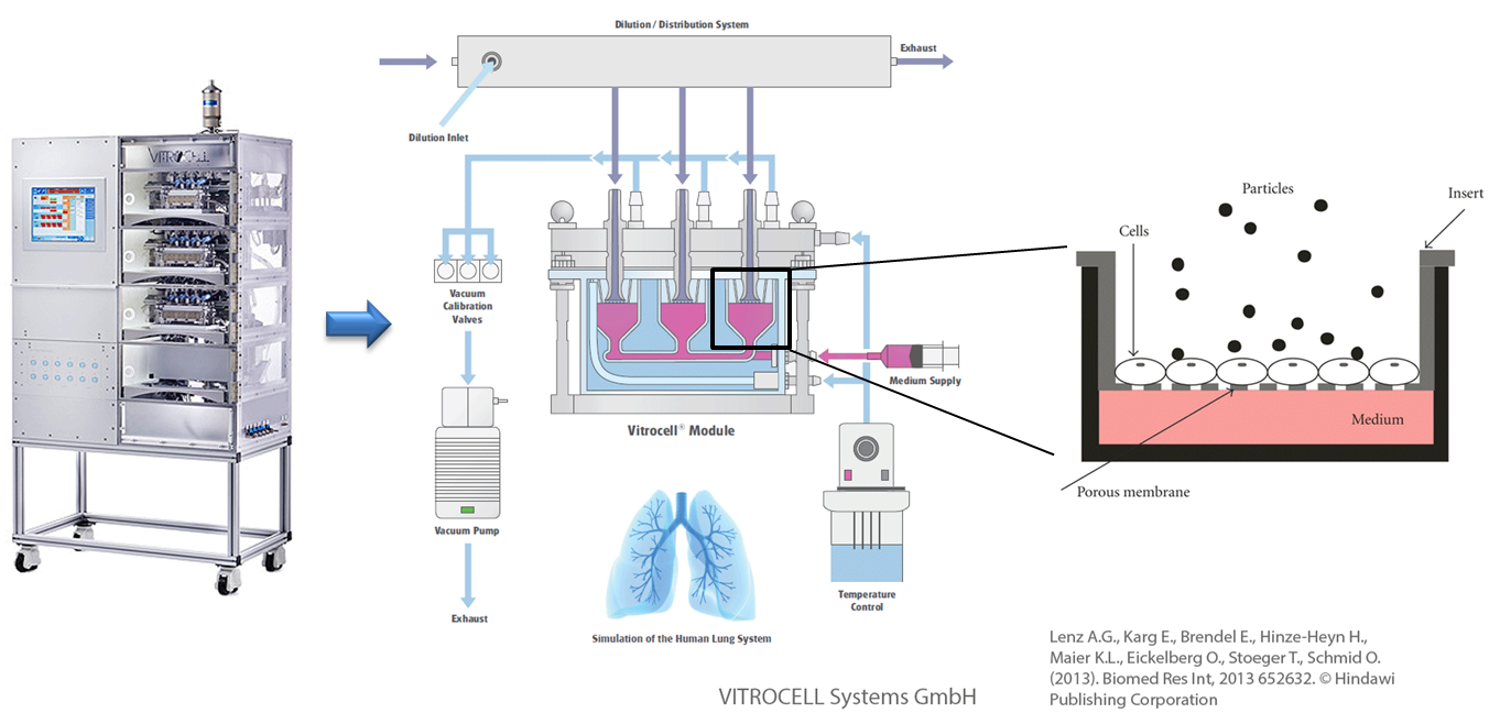 In vitro Exposition an der Luft-Flüssigkeits-Grenzschicht (ALI) am Beispiel des Karlsruhe Expositionssystems. © Vitrocell Systems GmbH & © Lenz et al (2013) Biomed Res Int, 2013 652632.