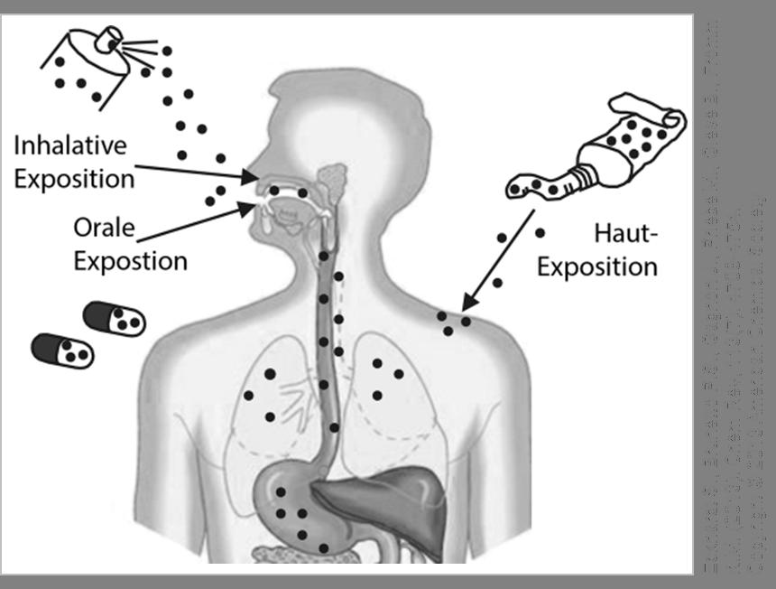 Mögliche Eintrittswege für Silber Nanopartikel in den Körper. © Verändert nach Eckhardt S. et al. 2013.