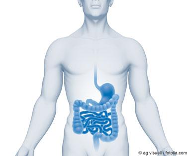 Illustration eines menschlichen Oberkörpers, bei dem der Verdauungstrakt hervorgehoben wurde als Beispiel für die Aufnahme von Nanomaterialien über den Verdauungstrakt